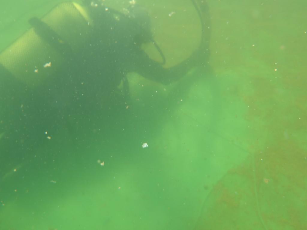 mergulhador_brejo