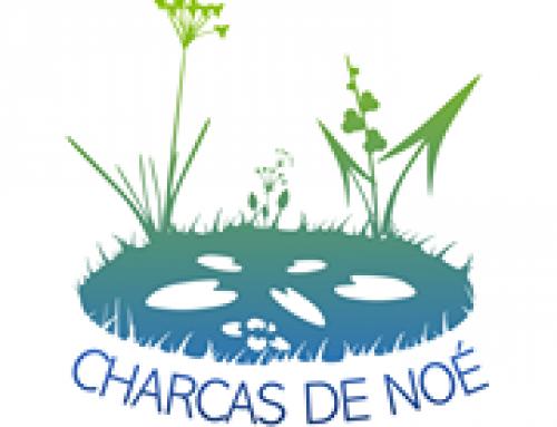 Charcas de Noé (Noah's ponds)