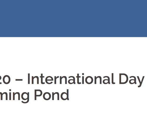 International Swimming Pond Day